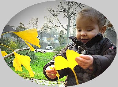 Toddler with Ginkgo leaves (photo Cor Kwant)