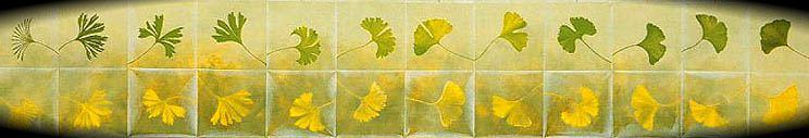 hojas (© Atsuko Kato)