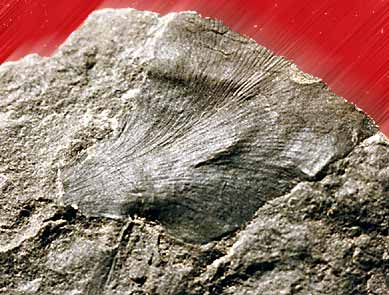 Ginkgo Eocene, Swauk formation, Washington State