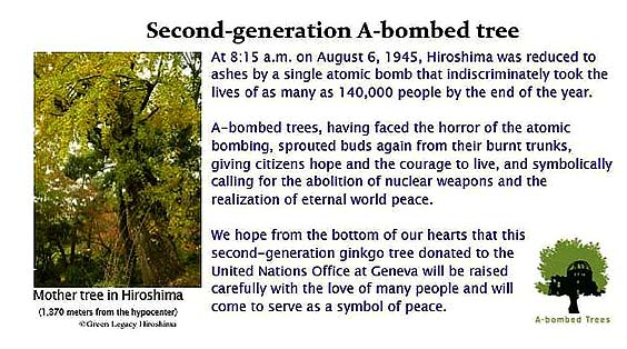 2nd generation A-bombed Ginkgo planted by UNITAR