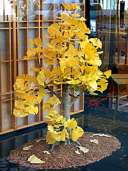 Wagashi art: Ginkgo bonsai (photo Sando Tomoki)