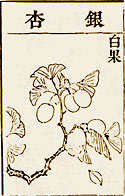 Illustration in Pen Tsao Kang Mu 1578