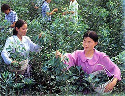 plantage in China (foto HeMeng)