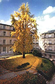 Cluny Mother House, Paris (photo Srs of St Joseph of Cluny)